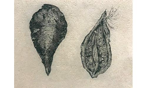 """""""Milkweed"""" by Rachel Singel"""